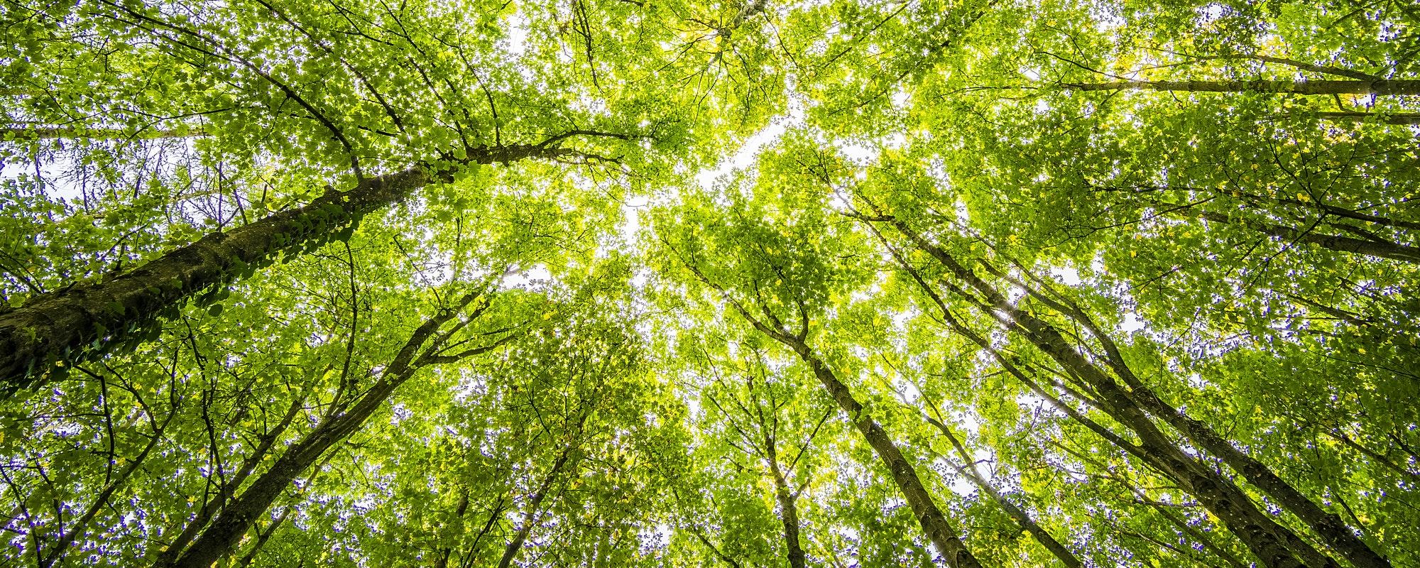 Wald mit Bäumen und Sonnenstrahlen